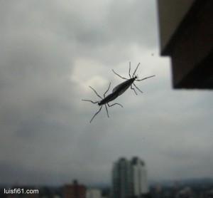 130714_insectos_luis_figueroa