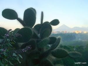 131022_cacto_volcan_de_agua_luis_figueroa
