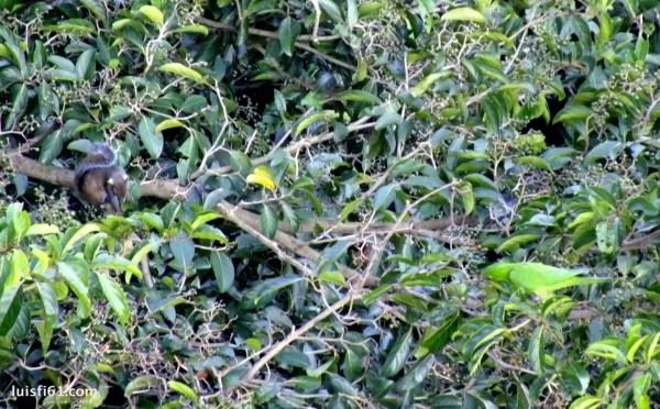 141110-ardilla-loro-perico-luis-figueroa-carpe-diem