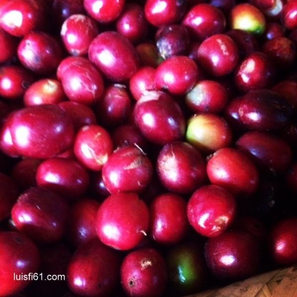 150129_cafe-luis-figueroa-carpe-diem